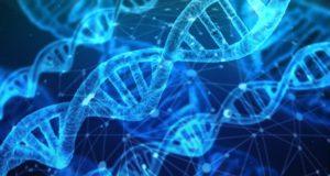 DNA Cannabis